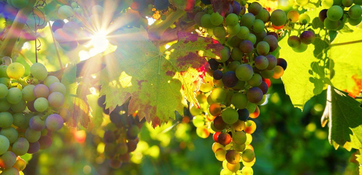 Sugestões para uma Páscoa em casa: Vinhos do Tejo para descobrir e apreciar com calma