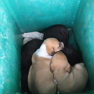 Cães abandonados junto ao lixo
