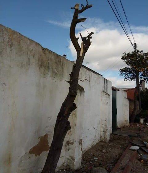 Queixa na GNR: Árvores podadas sem autorização