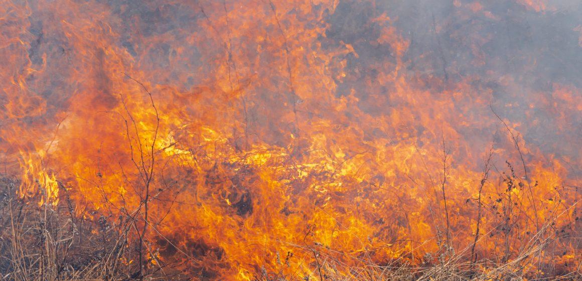 Câmara Municipal de Almeirim suspende queimas e queimadas