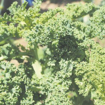 """Elisabete Veríssimo: """"É preciso ter tempo e vontade de aprender a ter uma horta"""""""