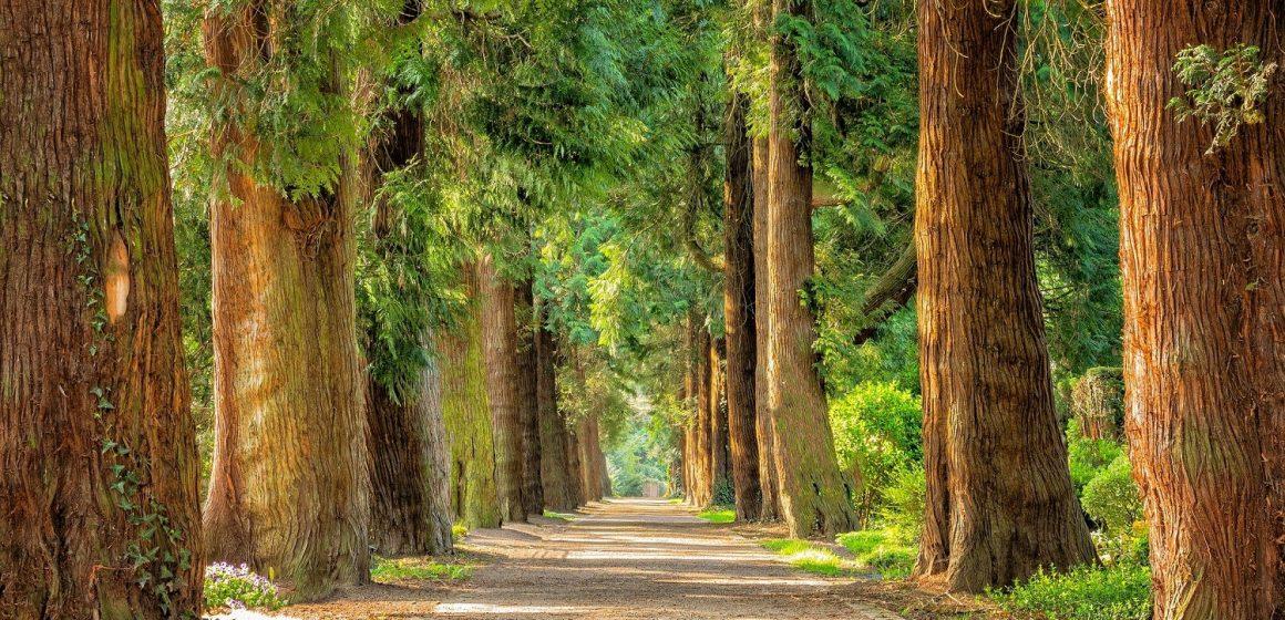 """Almeirim recebe exposição """"Uma Floresta Muito Original"""""""