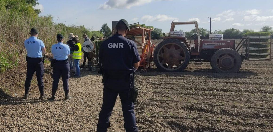 GNR realiza operação Produção Agrícola em Santarém
