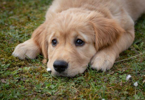 Município de Almeirim organiza Campanha de vacinação contra raiva canina